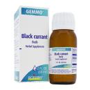 Black Currant/Ribus nigrum product image